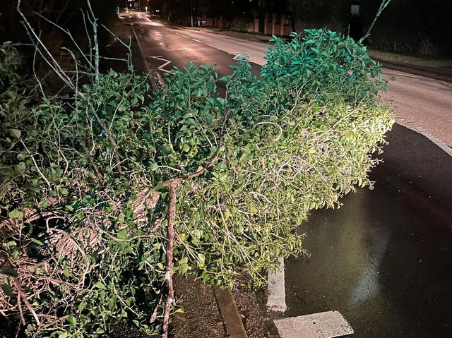 Police officers came across this tree fallen in Northampton. Photo: @NorthantsPC1337