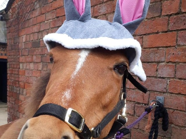Crystal the pony gets in the Easter mood with her bunny ears.