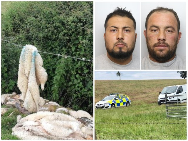 Three men have been jailed for the vile spate of sheep butcherings that plagued Northamptonshire last year.
