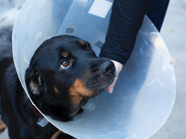 The RSPCA has launched a campaign to cut out animal cruelty.